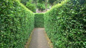 Быстрорастущие кустарники для живой изгороди — красиво, эффектно, презентабельно