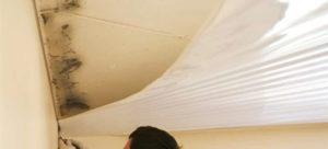 Чем обработать плесень и грибок под натяжным потолком, и стоимость очистки
