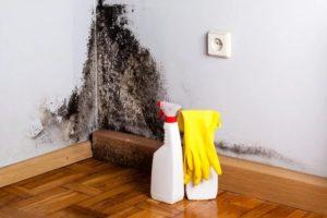 Плесень на обоях – причины появления и средства для очистки