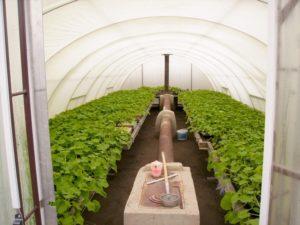 Теплица термос своими руками – собираем урожай круглый год