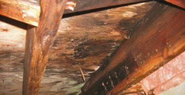 Гниение деревянного пола. Борьба и профилактика