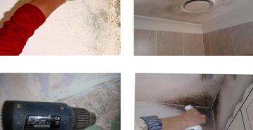 Как избавиться от плесени в ванной комнате и чем обработать грибок на потолке