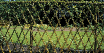 Живая изгородь из ивы – как создать зеленый забор на даче своими руками?